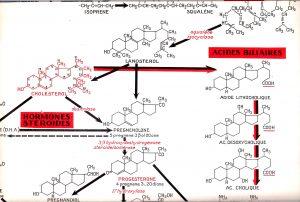 Synopticbiochim